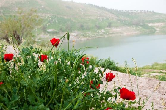 View on Ziglab Dam